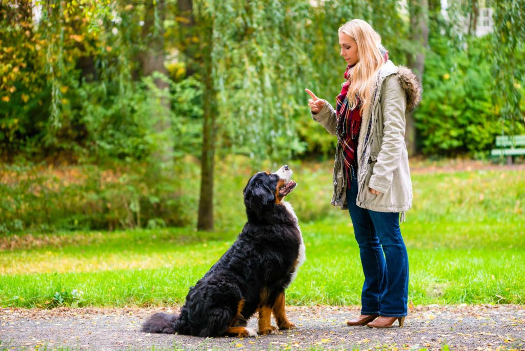 Image of a blonde woman training a large black dog in a park on a cool day