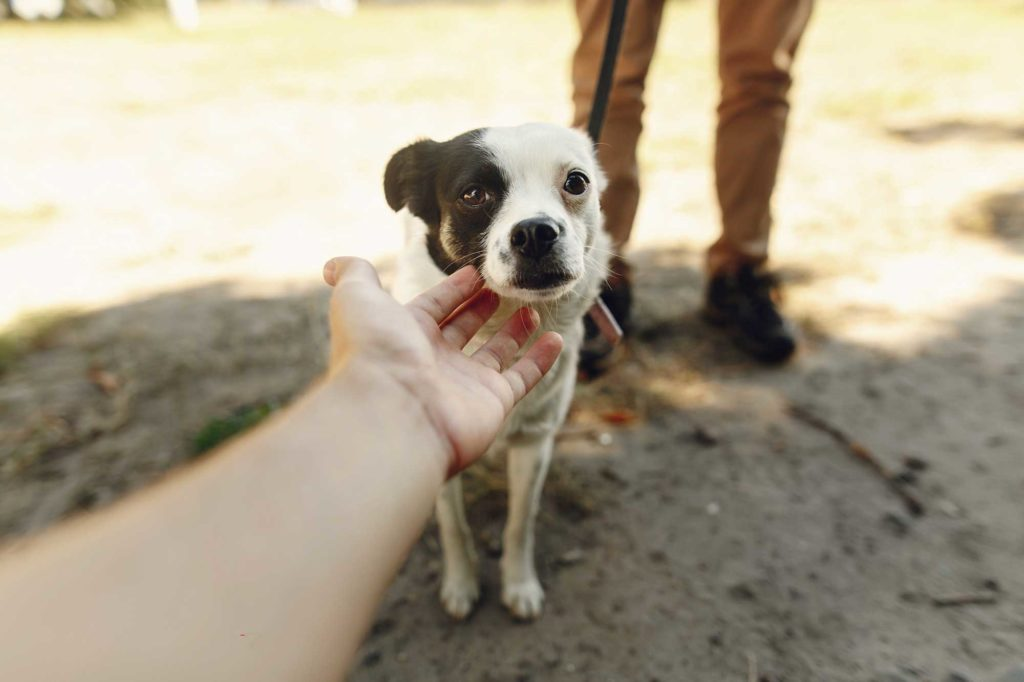 Photo of a scared dog as someone tries to pet it for article on what to do if your dog bites you