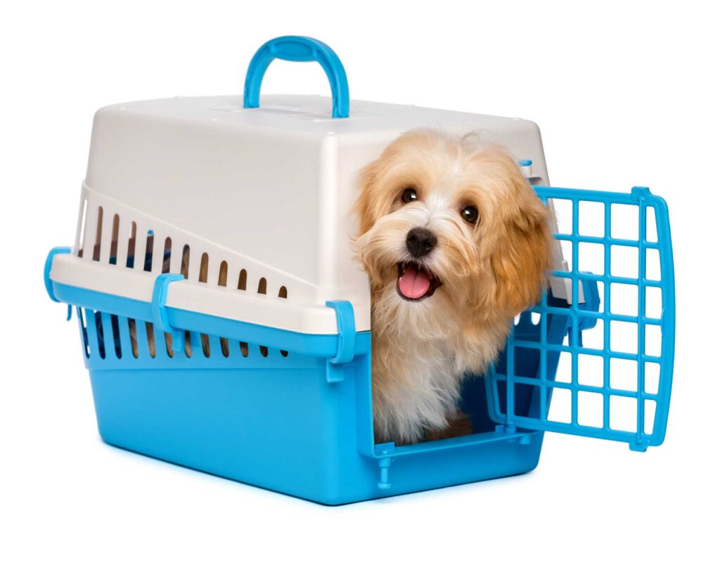 Image of a havanese puppy being crate trained for potty training in an apartment
