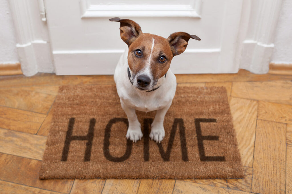 Image of a Jack Russell dog waiting on a doormat looking anxious as its owners leave home