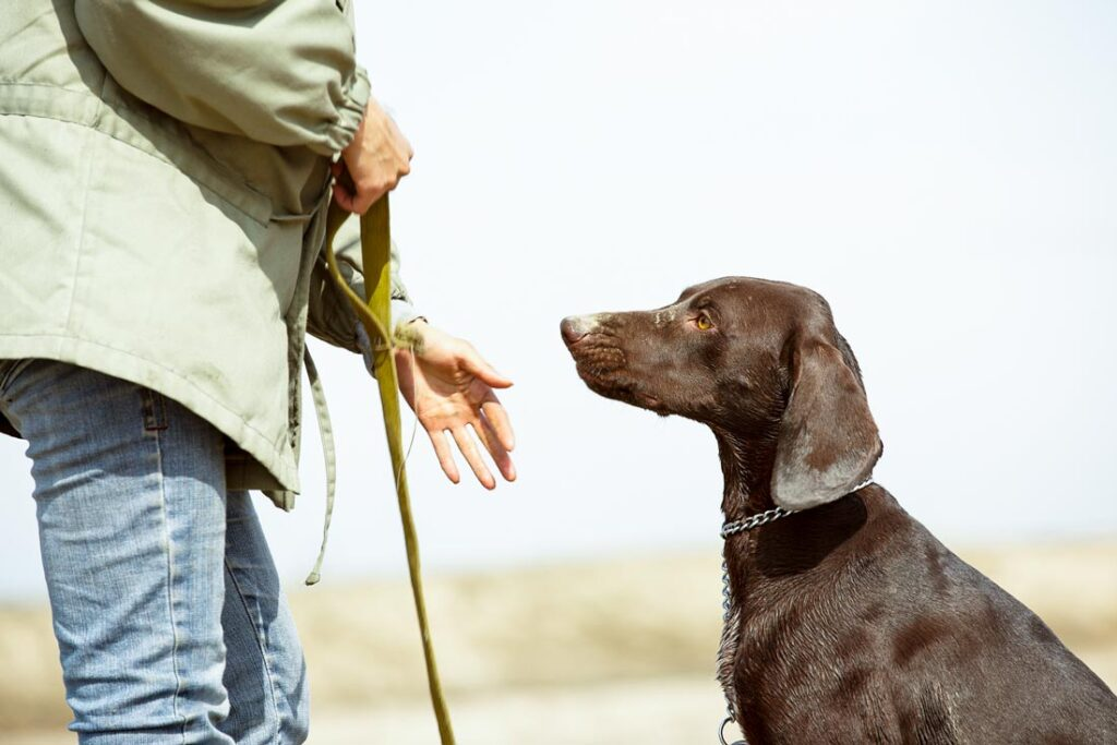 Image of a dog trainer training a dog to not be aggressive