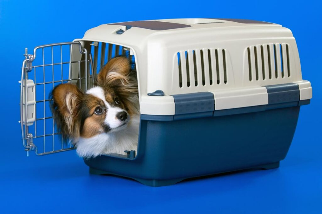 Image of a small papillion dog in a crate of a dog owner learning how to potty train a dog
