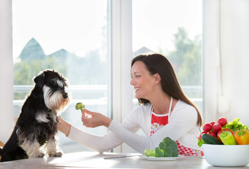 "Image of a woman feeding a small dog a piece of broccoli, an answer to ""what vegetables can dogs eat?"""
