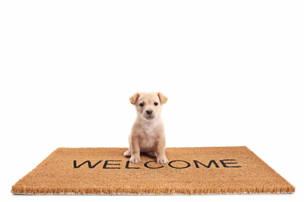 Image of a small puppy on a welcome mat ready to go outside to potty