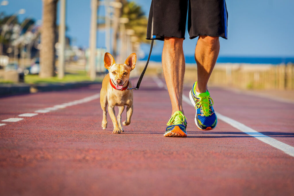 Image of a man with a dog walking obediently beside him on a beach boardwalk