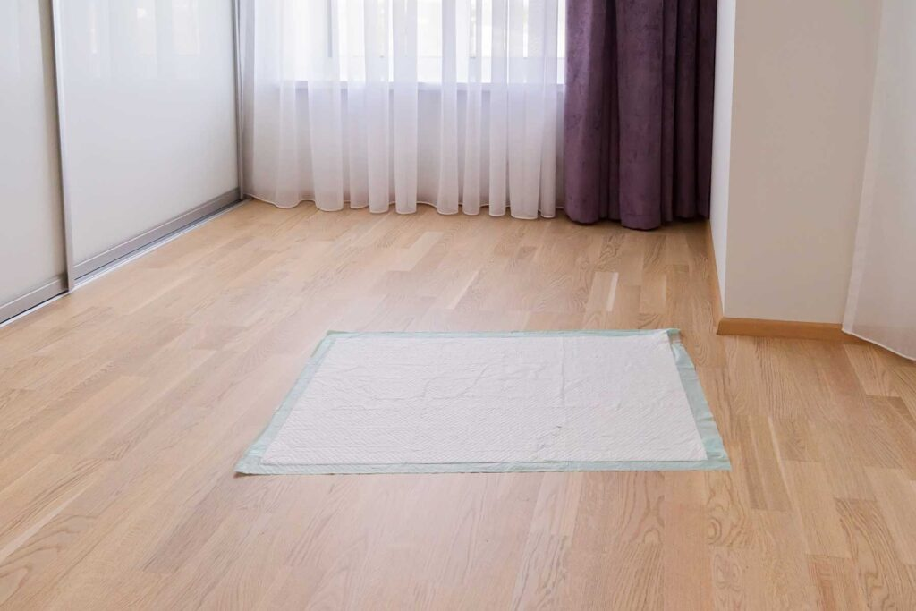 Image of a puppy pad in an apartment for potty training