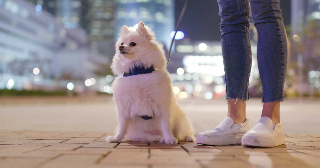 Image of a woman taking her puppy out before bedtime as potty training