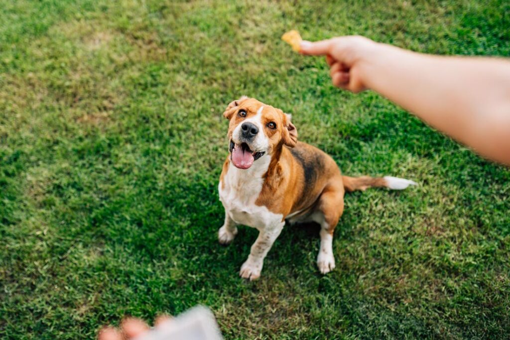 Image of a person giving a dog a treat for positive reinforcement to teach the dog not to bite