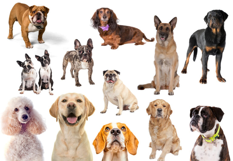 Collage of some of the dog breeds with the most health problems